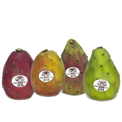 cactus-pears-andy-boy