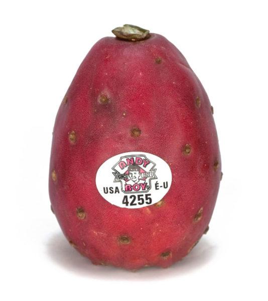 andy-boy-cactus-pear