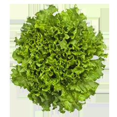 hoja-verde