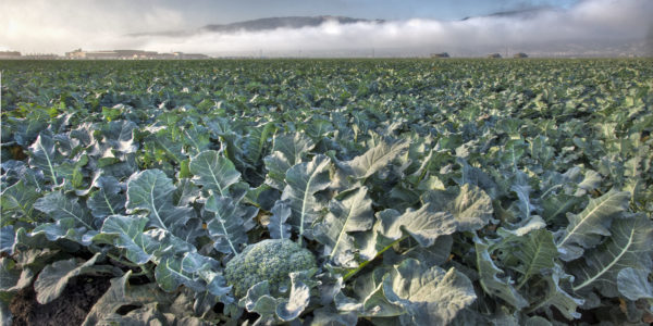 -Broccoli-and-Building-as-the-fog-clears-scaled